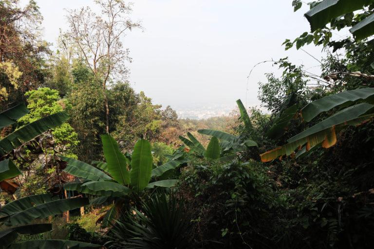 Secret Jungle Temple of Chiang Mai