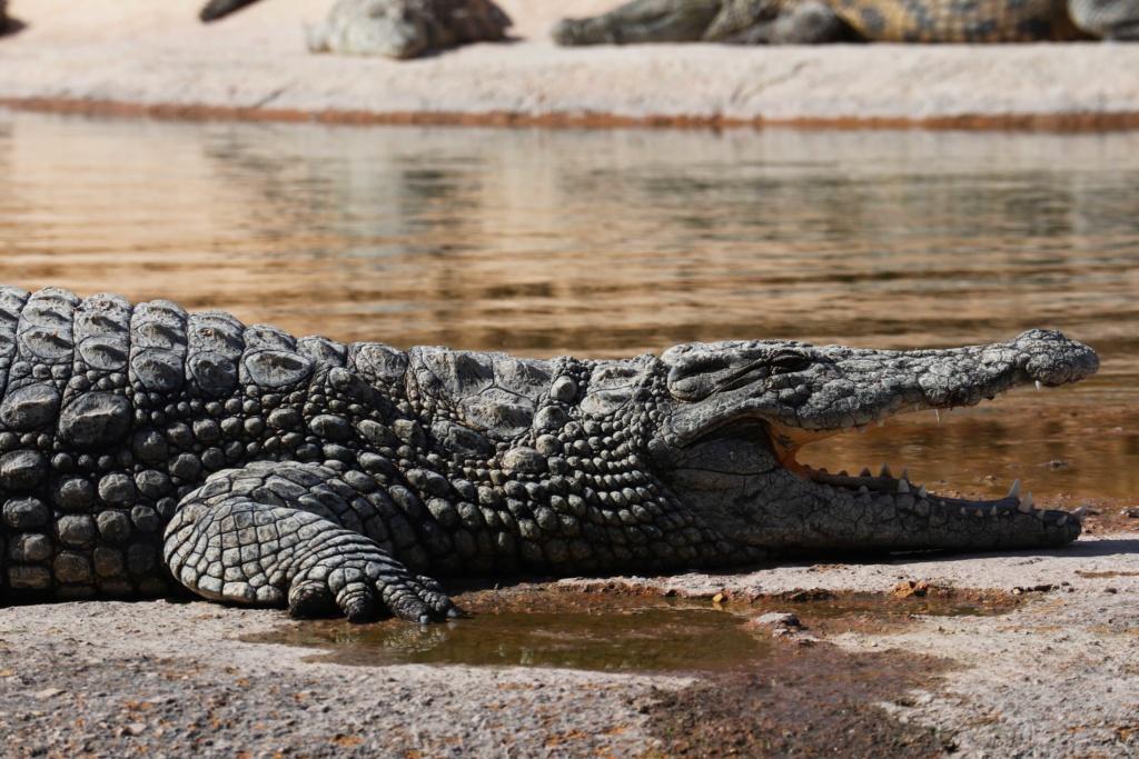 Crocodile Park in Agadir