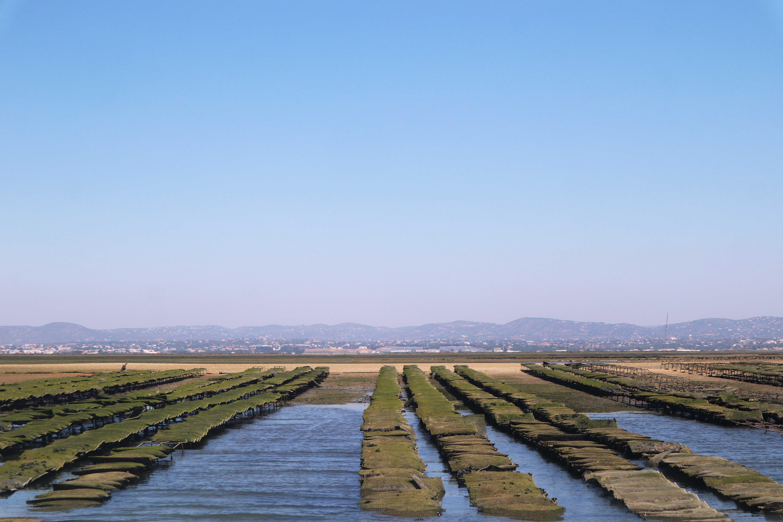 oyster farm in Ria Formosa